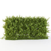 Hedge of bushes 3d model