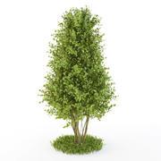 Bush-cone 3d model