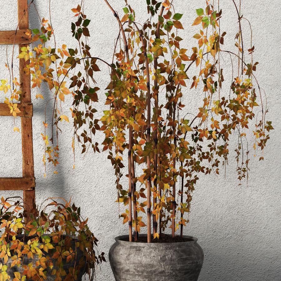 Rośliny w doniczkach Zestaw royalty-free 3d model - Preview no. 6