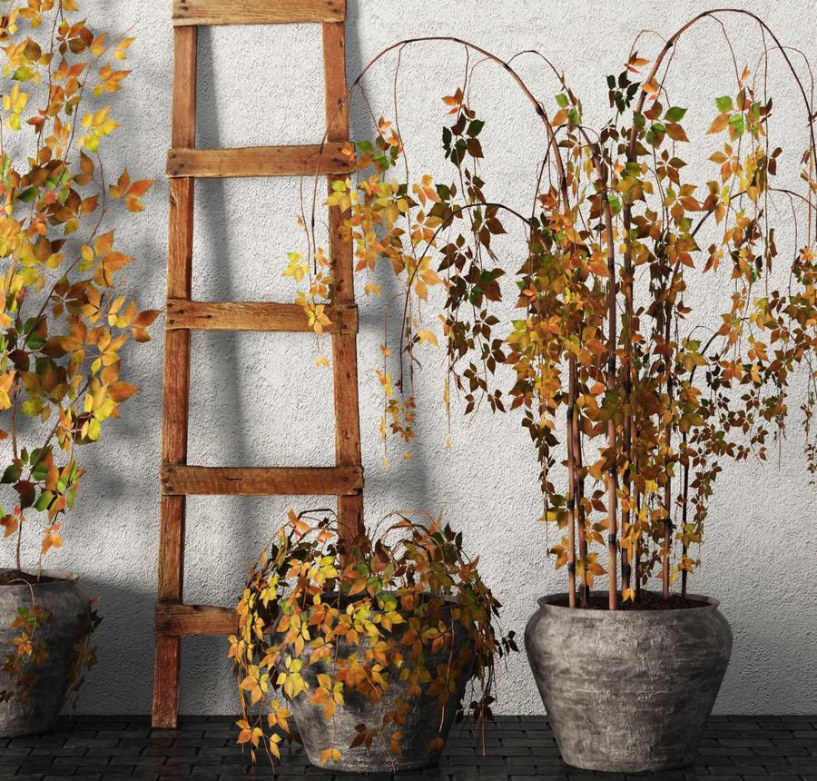 Rośliny w doniczkach Zestaw royalty-free 3d model - Preview no. 5