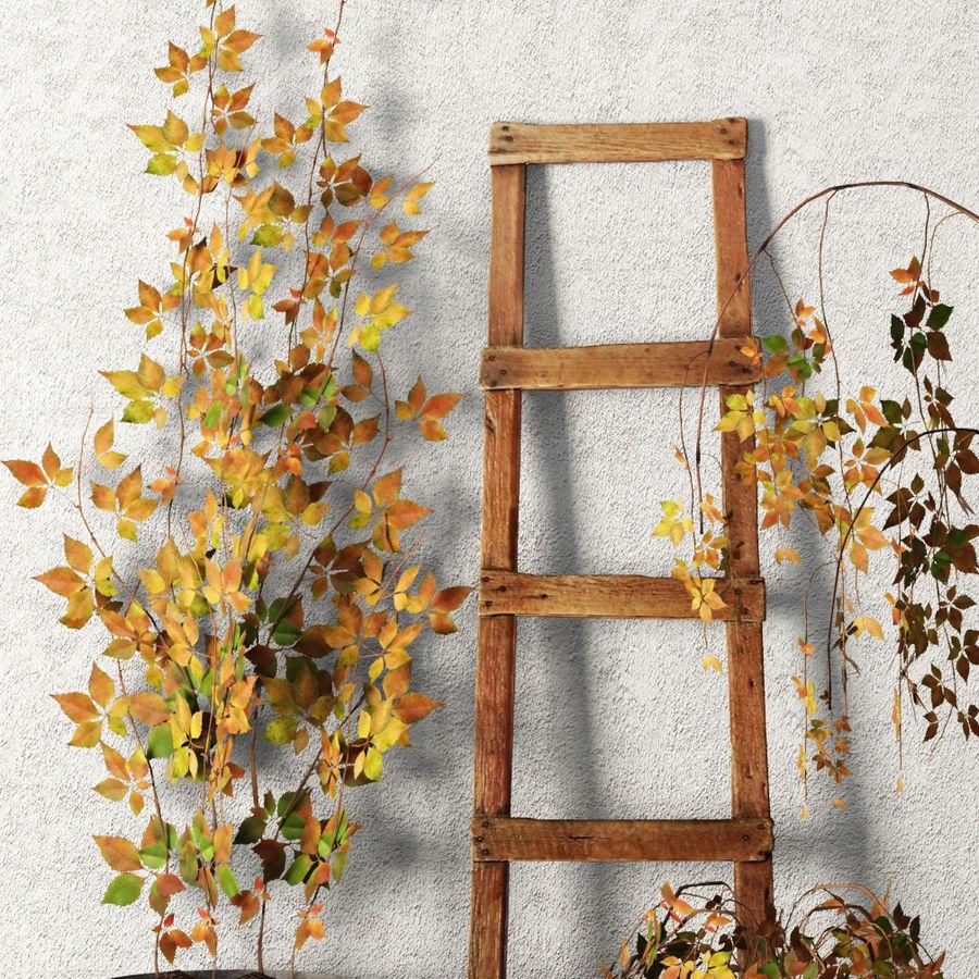 Rośliny w doniczkach Zestaw royalty-free 3d model - Preview no. 2