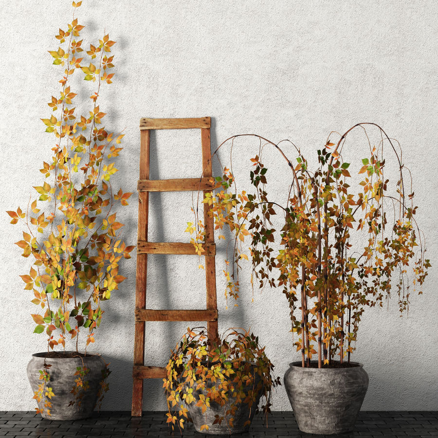 Rośliny w doniczkach Zestaw royalty-free 3d model - Preview no. 1