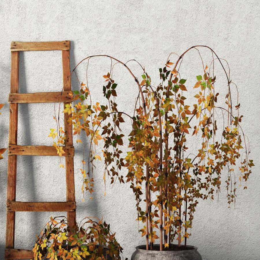Rośliny w doniczkach Zestaw royalty-free 3d model - Preview no. 3
