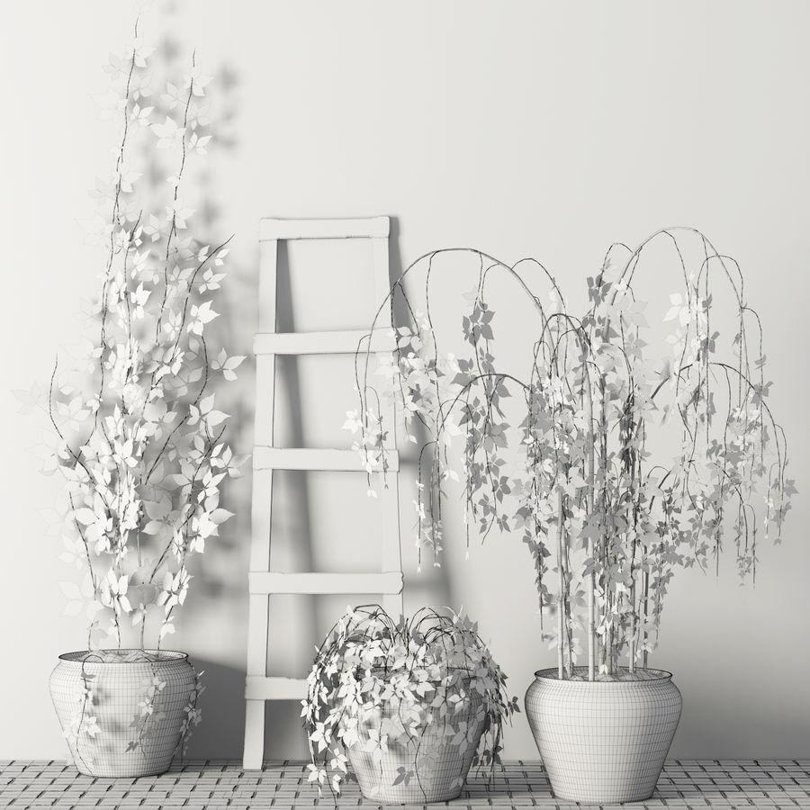 Rośliny w doniczkach Zestaw royalty-free 3d model - Preview no. 7