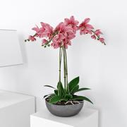 Orquídea 03 3d model