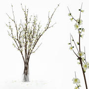 Branches in a vase 3d model
