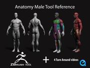 Anatomi manligt verktyg referens för konstnär 3d model