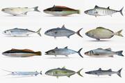 Collezione di pesci mediterranei 3d model