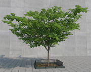 Drzewo 3 3d model