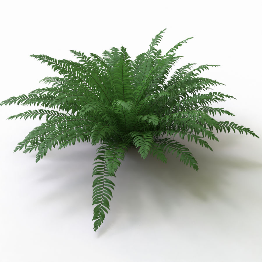 Realistic bush sword fern royalty-free 3d model - Preview no. 2