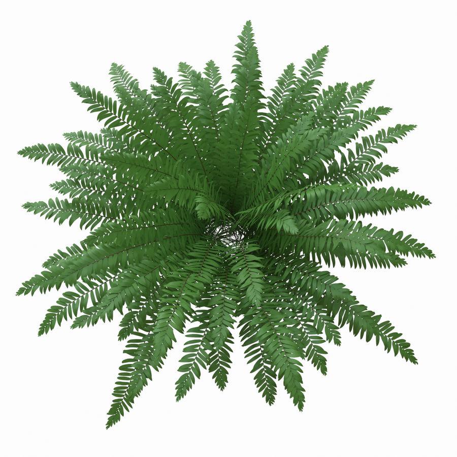 Realistic bush sword fern royalty-free 3d model - Preview no. 3