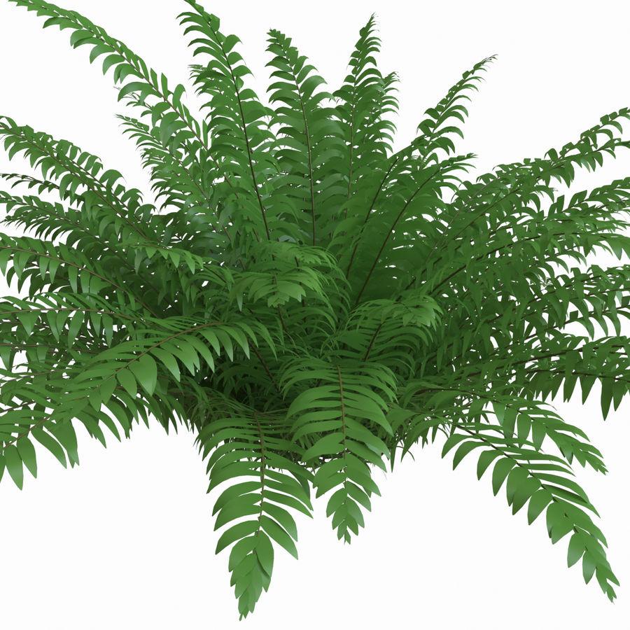 Realistic bush sword fern royalty-free 3d model - Preview no. 4