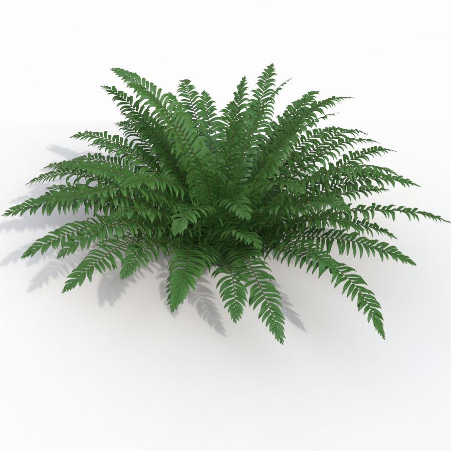 Realistic bush sword fern royalty-free 3d model - Preview no. 1