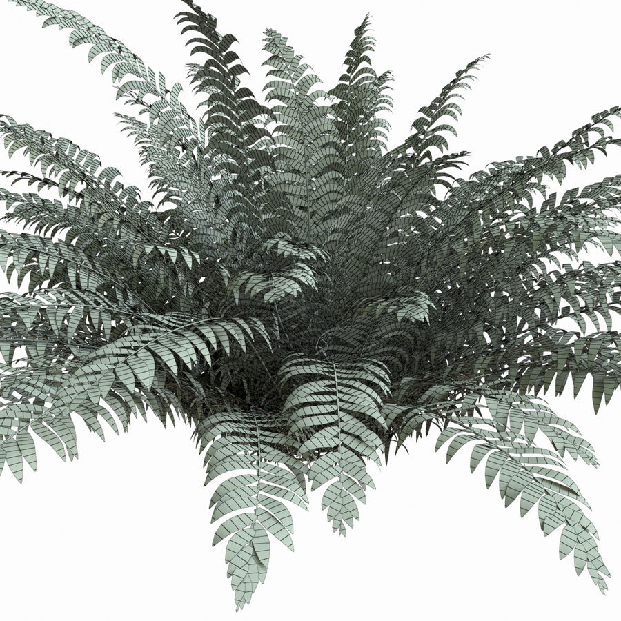 Realistic bush sword fern royalty-free 3d model - Preview no. 5