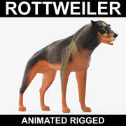 Rottweiler (Animated Rigged) 3d model