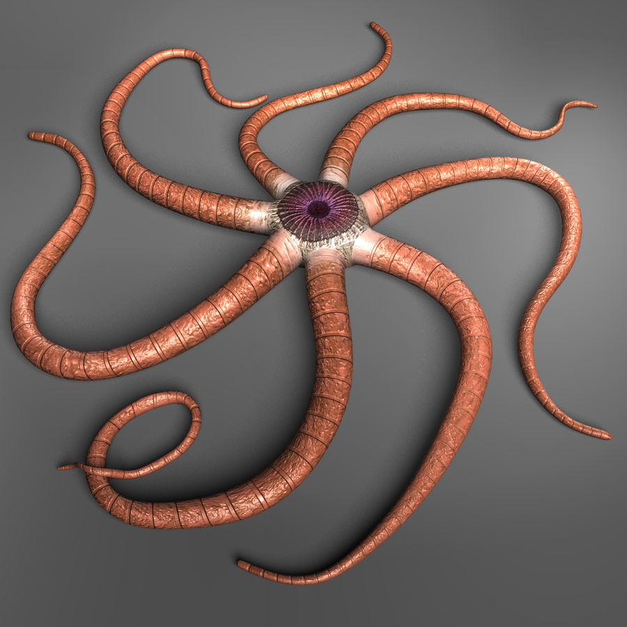 Starfish Creature royalty-free 3d model - Preview no. 5