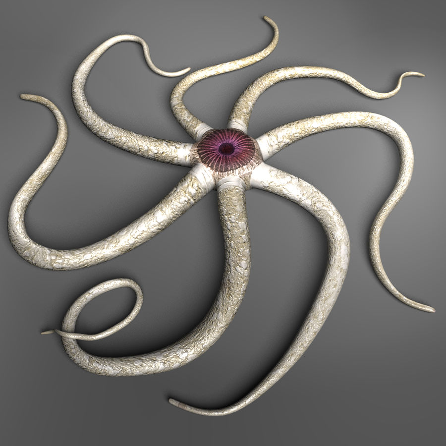 Starfish Creature royalty-free 3d model - Preview no. 7