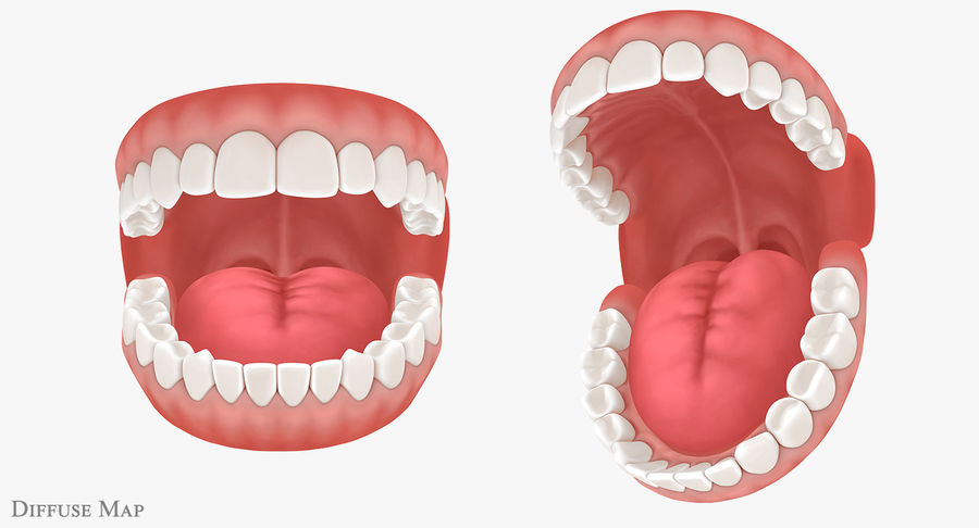 Teeth royalty-free 3d model - Preview no. 17