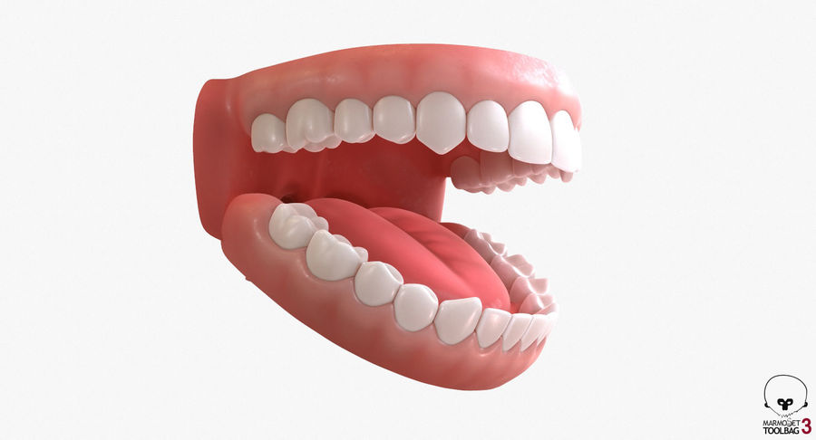 Teeth royalty-free 3d model - Preview no. 18