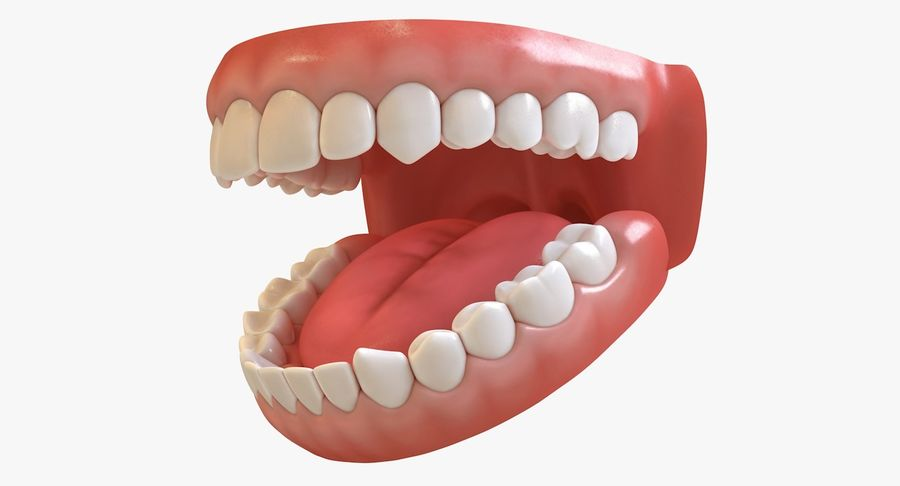 Teeth royalty-free 3d model - Preview no. 4