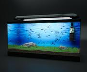 Fish Tank Neon 3d model