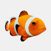 Palyaço balığı 3d model