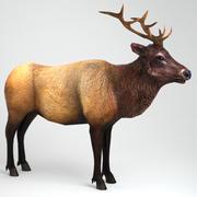 Elk erkek Low poly 3d model