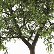 Yaprak döken ağaç 3d model