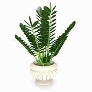 Cartoon Ornamental Plant 3d model