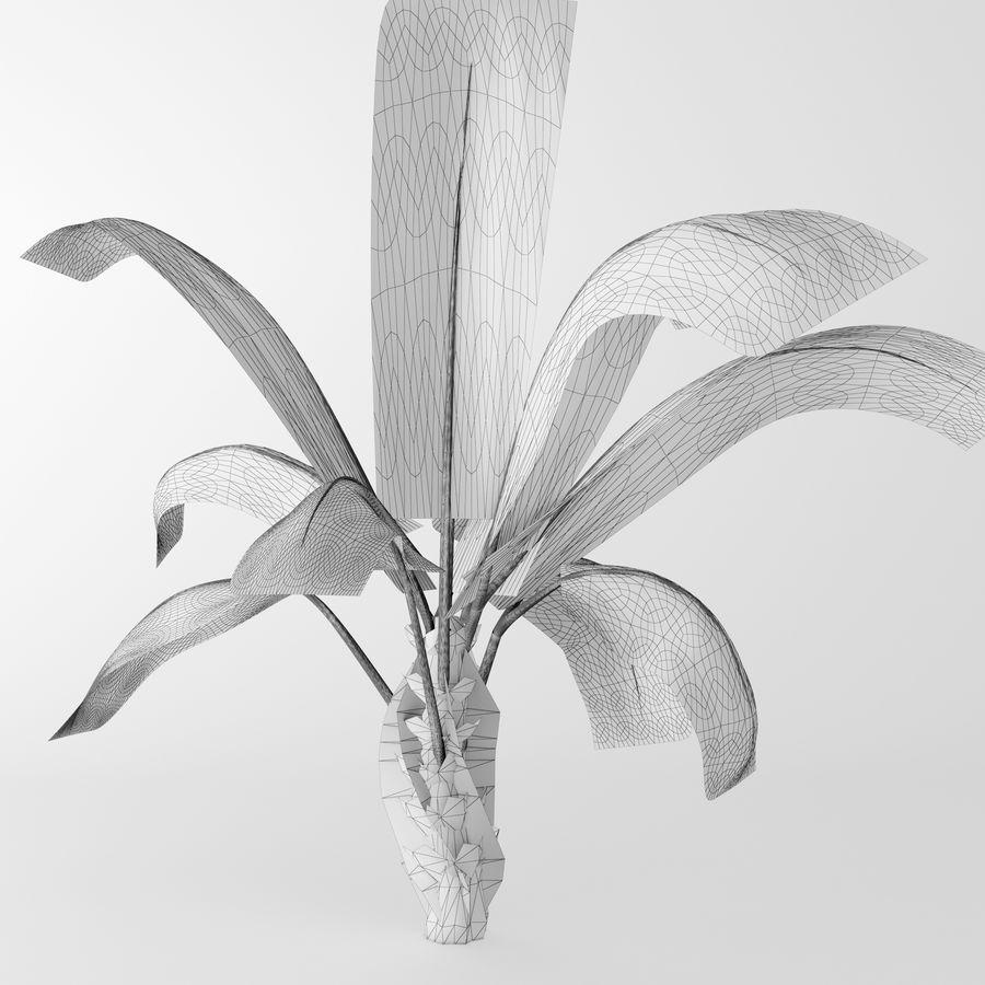 banana plant royalty-free 3d model - Preview no. 2