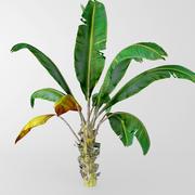 plant de banane 3d model