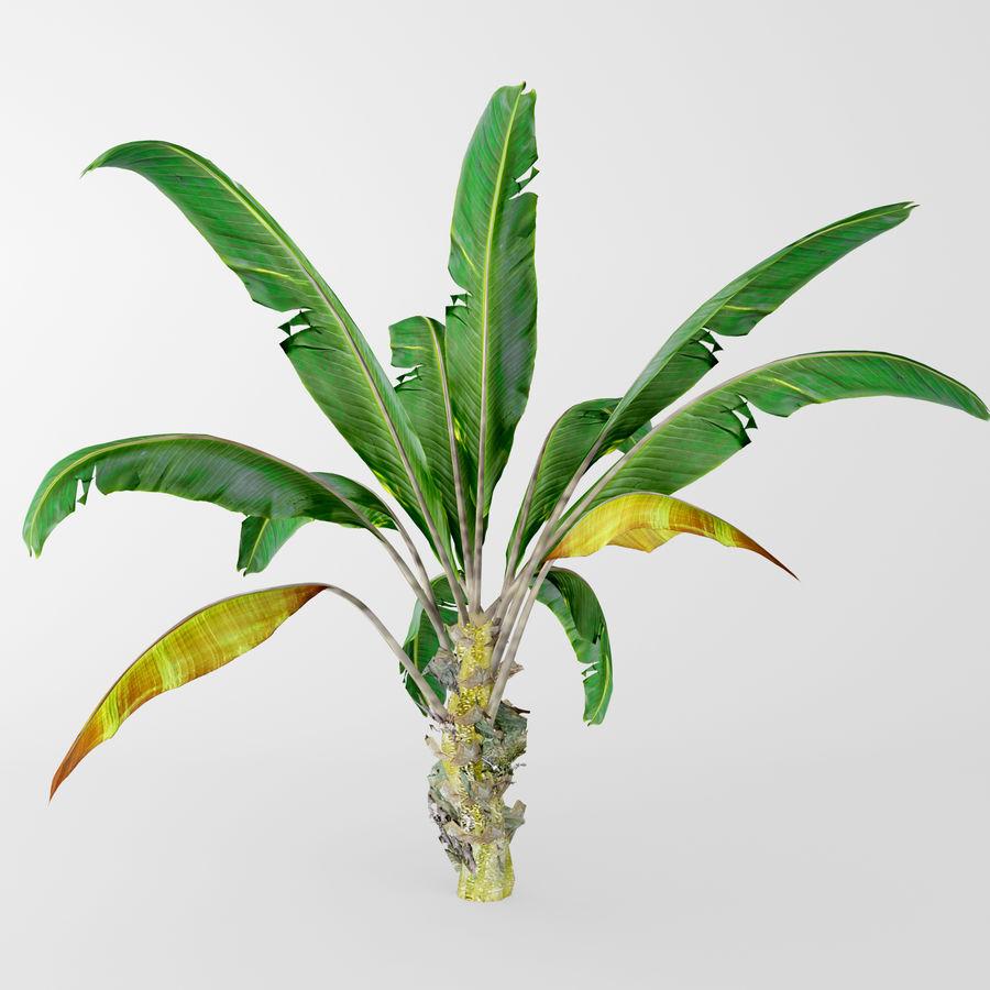 banana plant royalty-free 3d model - Preview no. 3