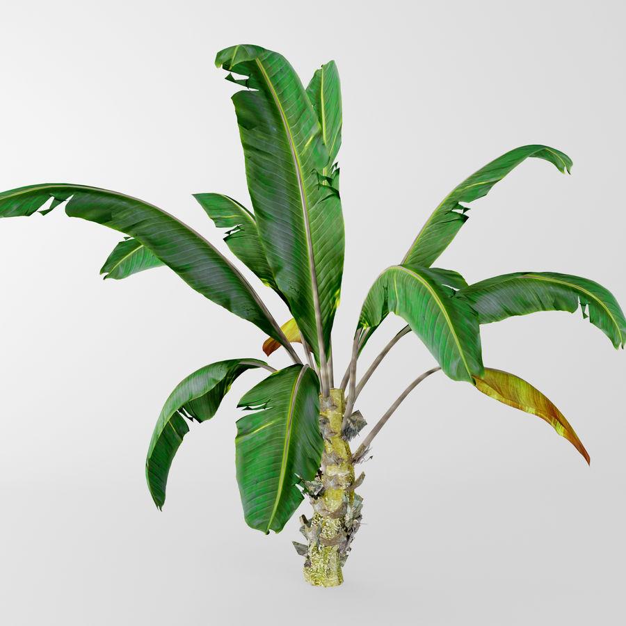 banana plant royalty-free 3d model - Preview no. 5
