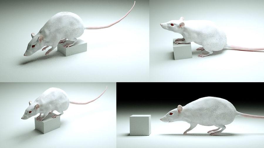 Rigged Mouse Rat z przemieszczeniem i normalnymi mapami 8k royalty-free 3d model - Preview no. 3