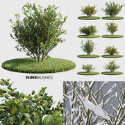 Nine Bushes (+GrowFX) 3d model