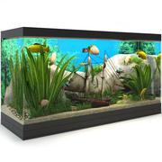 Akwarium Pirat 3d model
