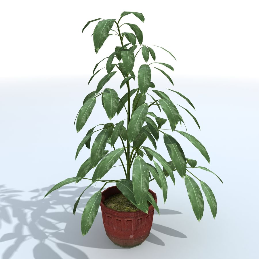 Plant in bloempot royalty-free 3d model - Preview no. 3