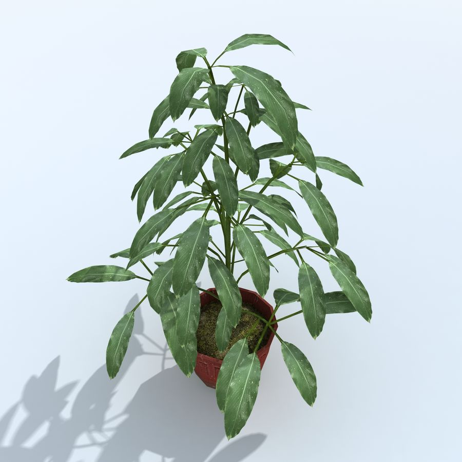 Plant in bloempot royalty-free 3d model - Preview no. 6