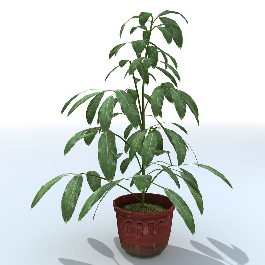 Plant in bloempot royalty-free 3d model - Preview no. 5