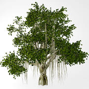 banyan_tree 3d model