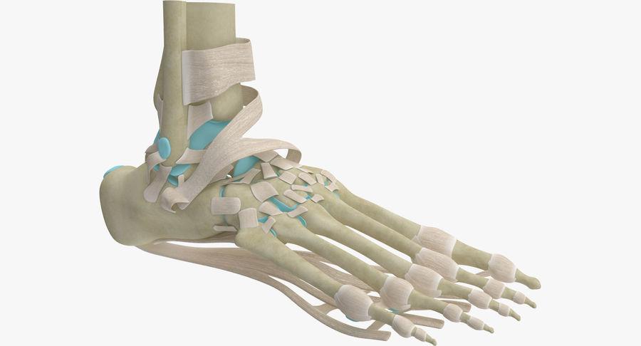 Anatomia szkieletu stopy royalty-free 3d model - Preview no. 2