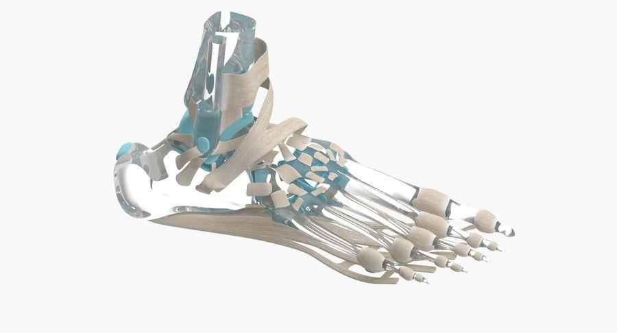 Anatomia szkieletu stopy royalty-free 3d model - Preview no. 6