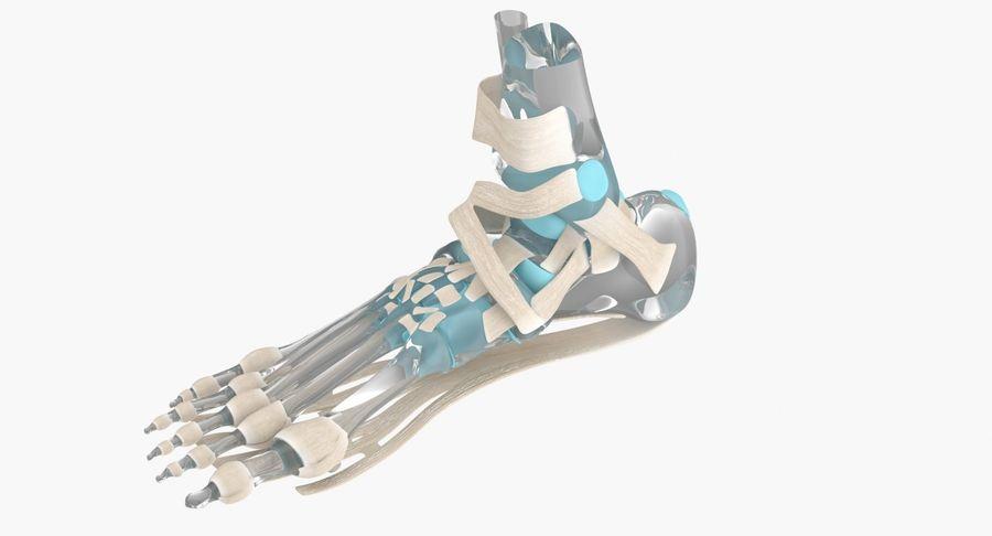 Anatomia szkieletu stopy royalty-free 3d model - Preview no. 7