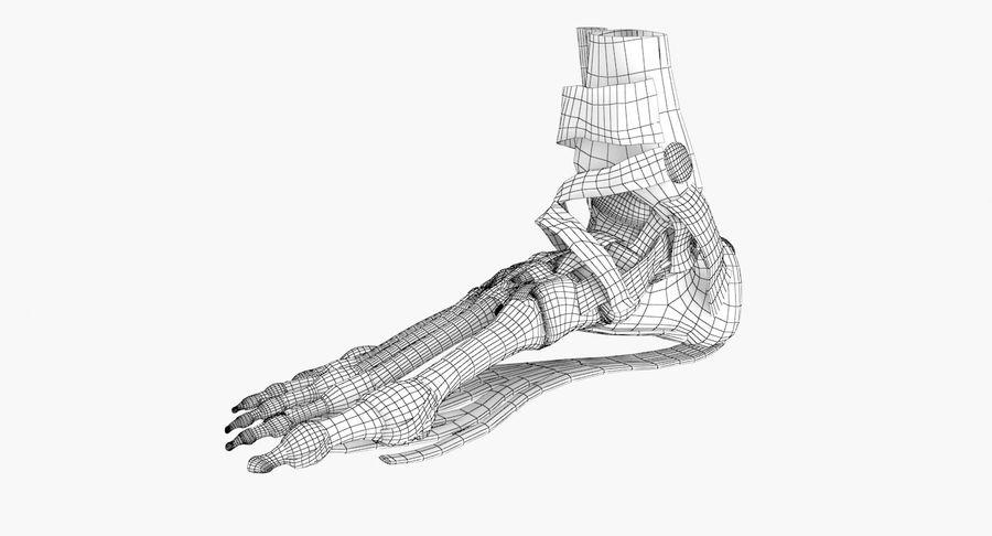 Anatomia szkieletu stopy royalty-free 3d model - Preview no. 11