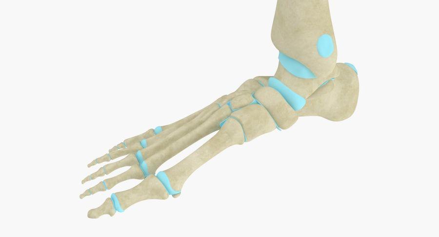 Anatomia szkieletu stopy royalty-free 3d model - Preview no. 5