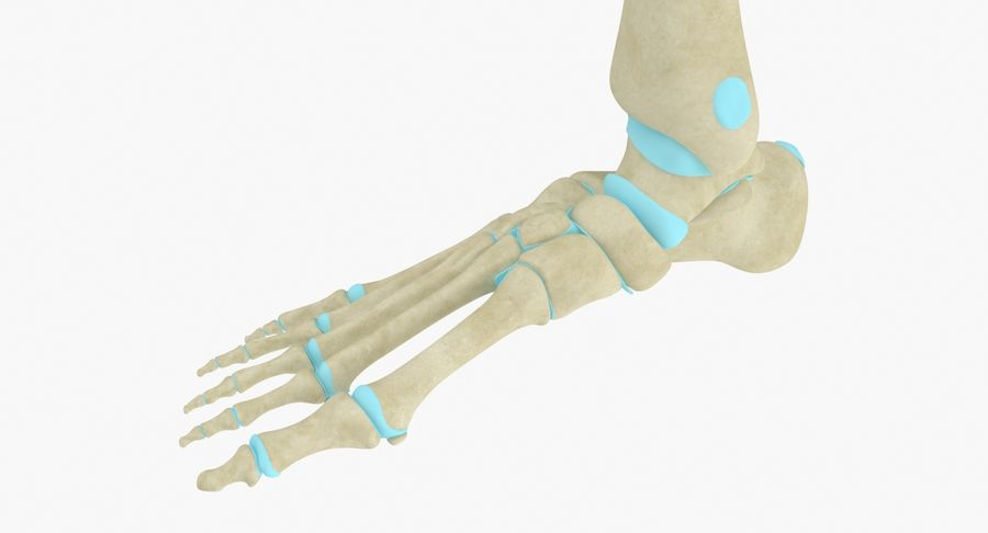 Foot Skeleton Anatomy royalty-free 3d model - Preview no. 5