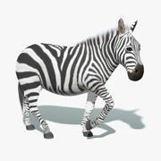 Zebra (päls) riggad 3d model