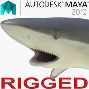 Tiburón Arrecife Gris aparejado para Maya modelo 3d