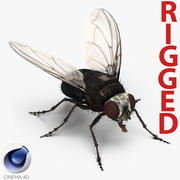 Fly Rigged per Cinema 4D 3d model
