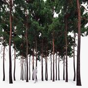 Forest Scots Pines 3d model